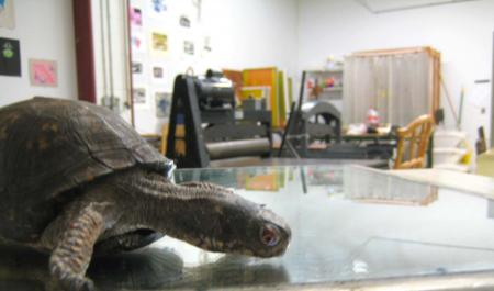 image: Turtle at legupstudio.com_.jpg