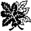 image: Leaf