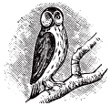 image: owl.png